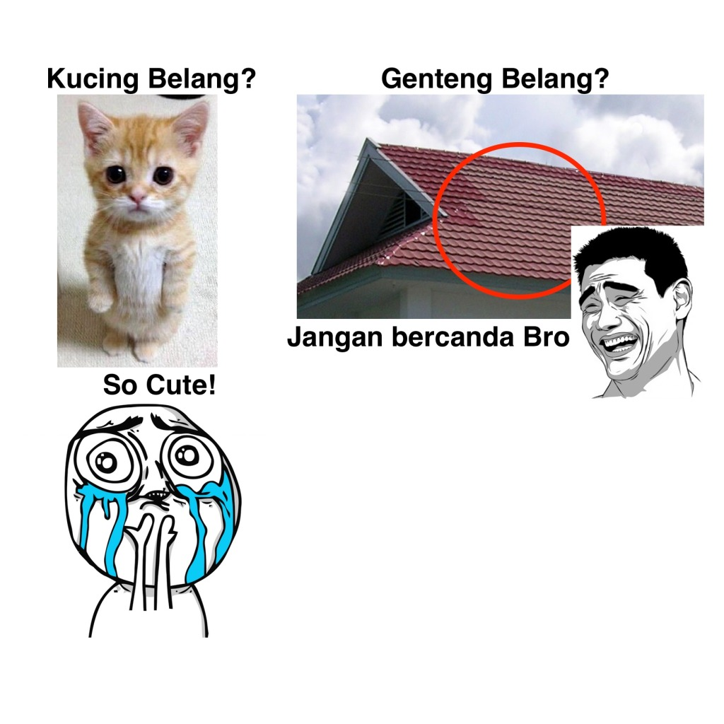 Kucing Belang vs Genteng Belang