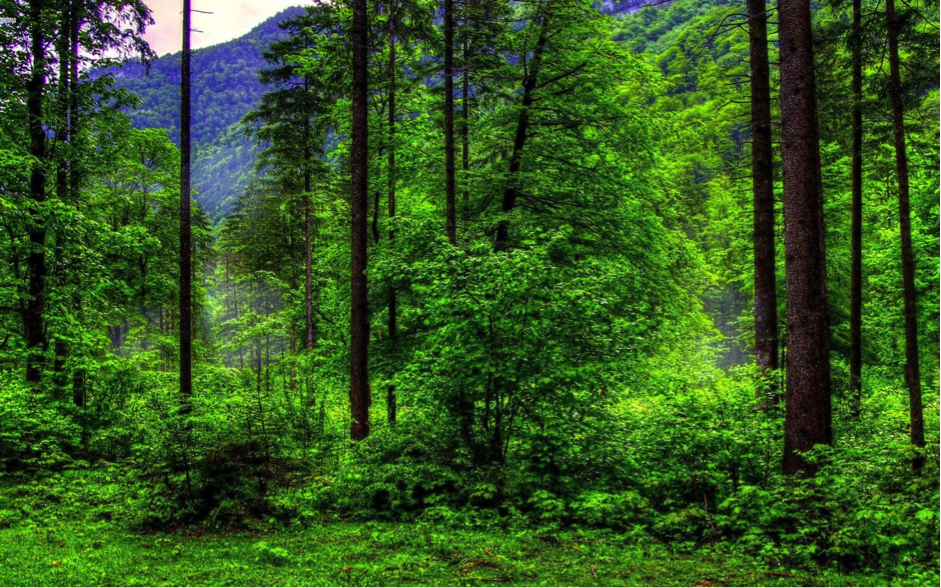 Taso 4 Tree